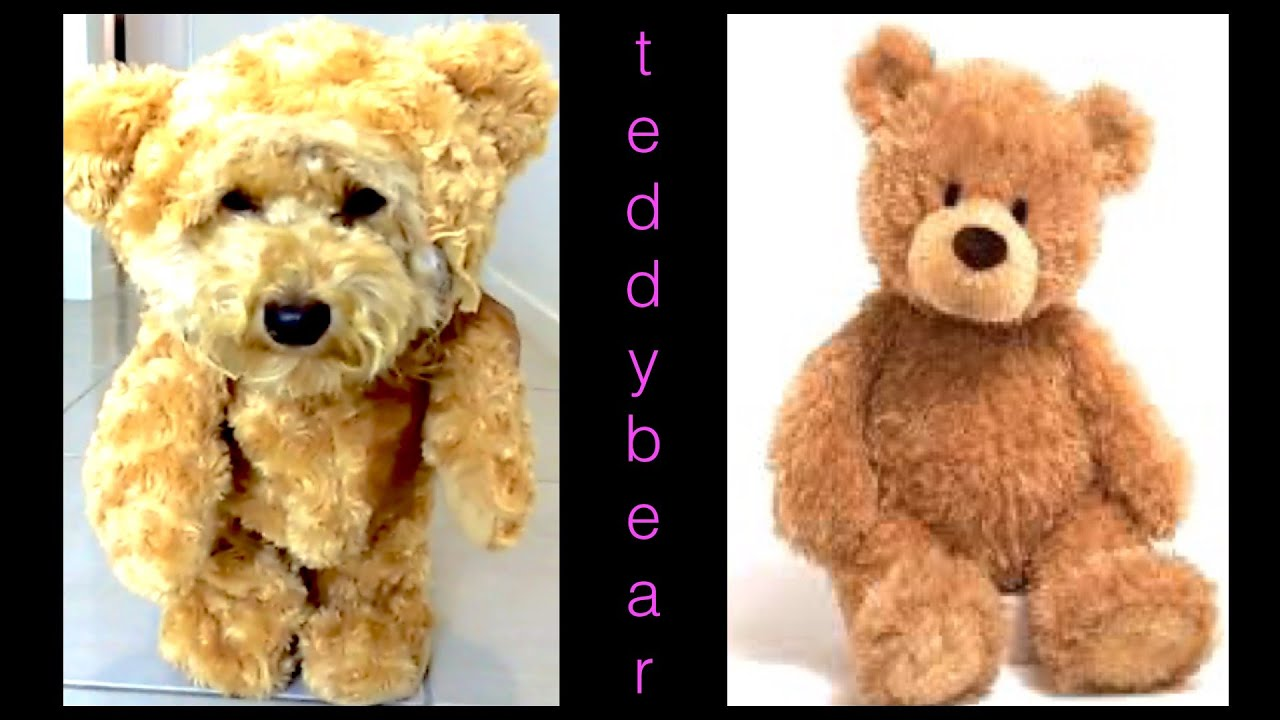 How to make TEDDY BEAR DOG COSTUME MUNCHKIN OUTFIT - DIY ...