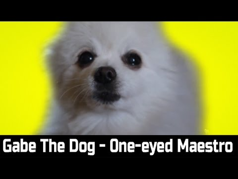 Gabe The Dog - One-eyed Maestro (Kevin MacLeod)