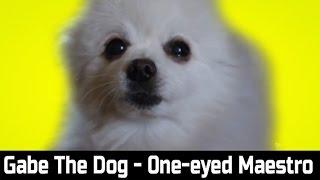 Gabe The Dog - One-eyed Maestro (Kevin MacLeod)