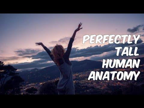 Perfectly Tall Human Anatomy
