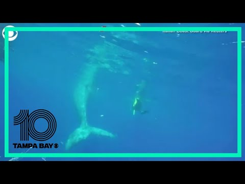 Whale Rescued From Fishing Net
