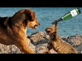 TRY NOT TO LAUGH - Funniest ANIMAL FAILS Compilation - Cute Dogs and Cats Doing Funny Things #2 HD