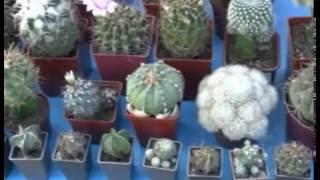 Выставка кактусов. Шикарный ассортимент.