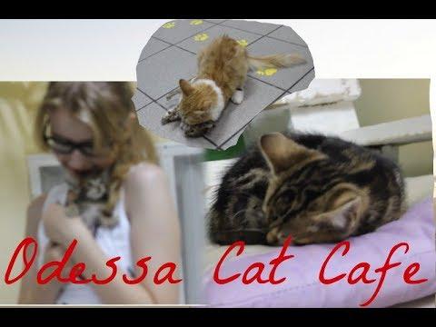 ODESSA CAT CAFE