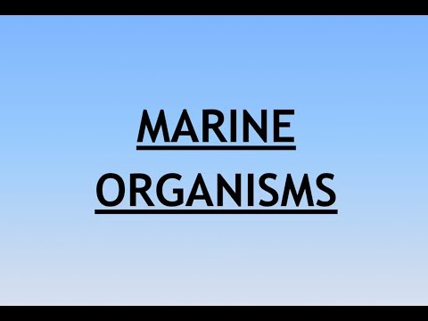 Environment and Ecology Lecture 9.1 - Marine Organisms
