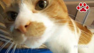 猫達の挨拶 みみ怒る 【瀬戸のみみ日記】Everyday's cats Greeting