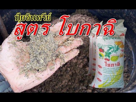 วิธีทำจุลินทรีย์แห้ง โบกาฉิ บำรุงราก ลำต้น ใบ แก้ไขดินเสีย
