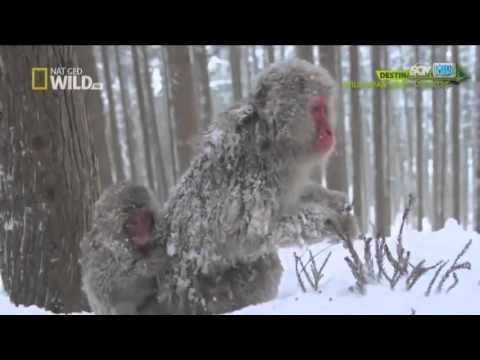Thế Giới Động Vật Hoang Dã,Thiên Nhiên Hoang Dã Loài Khỉ (Thuyết Minh).