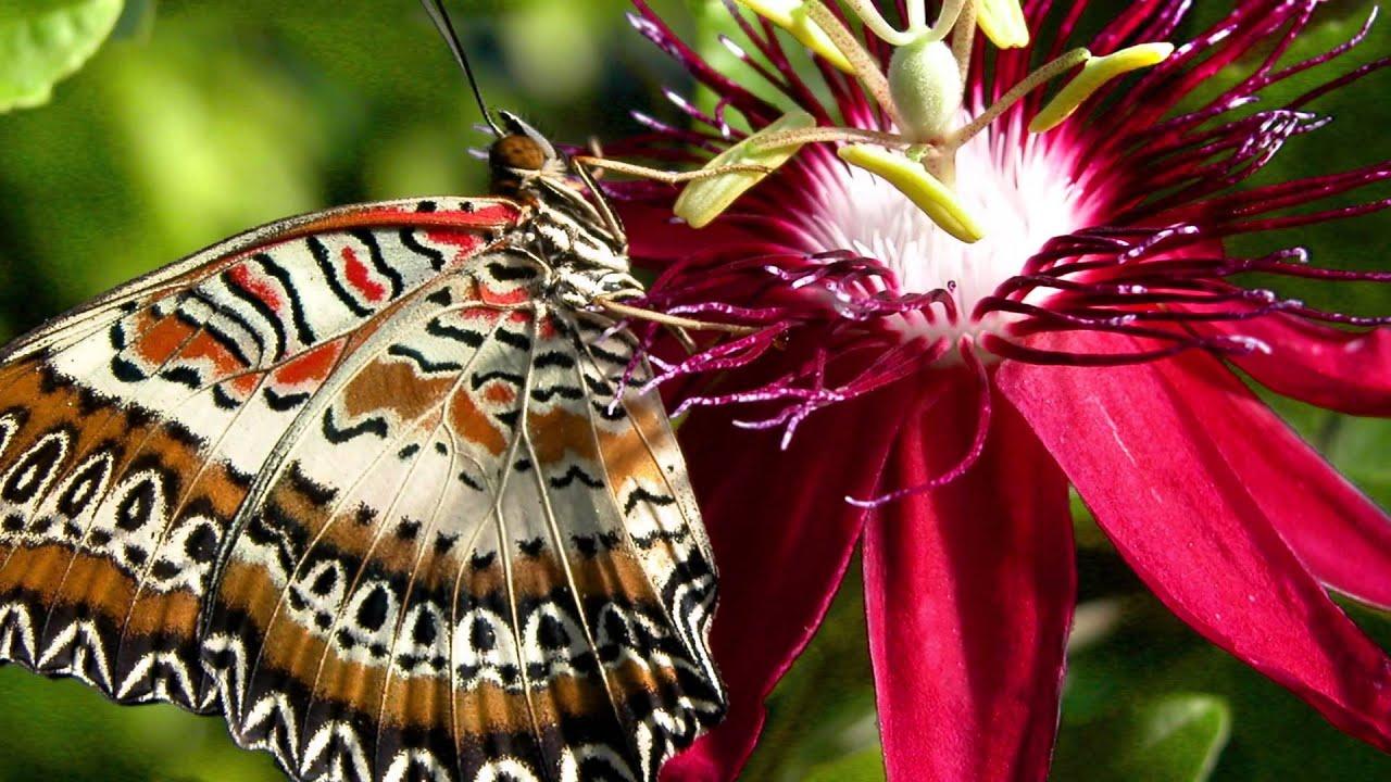 Jardin des Papillons vivants de Hunawihr - YouTube