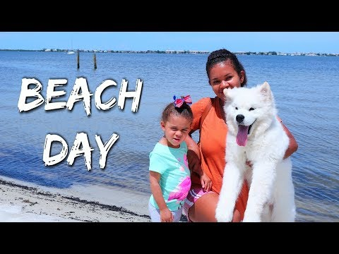 A Day In The Life of a Samoyed Dog (Beach Day)