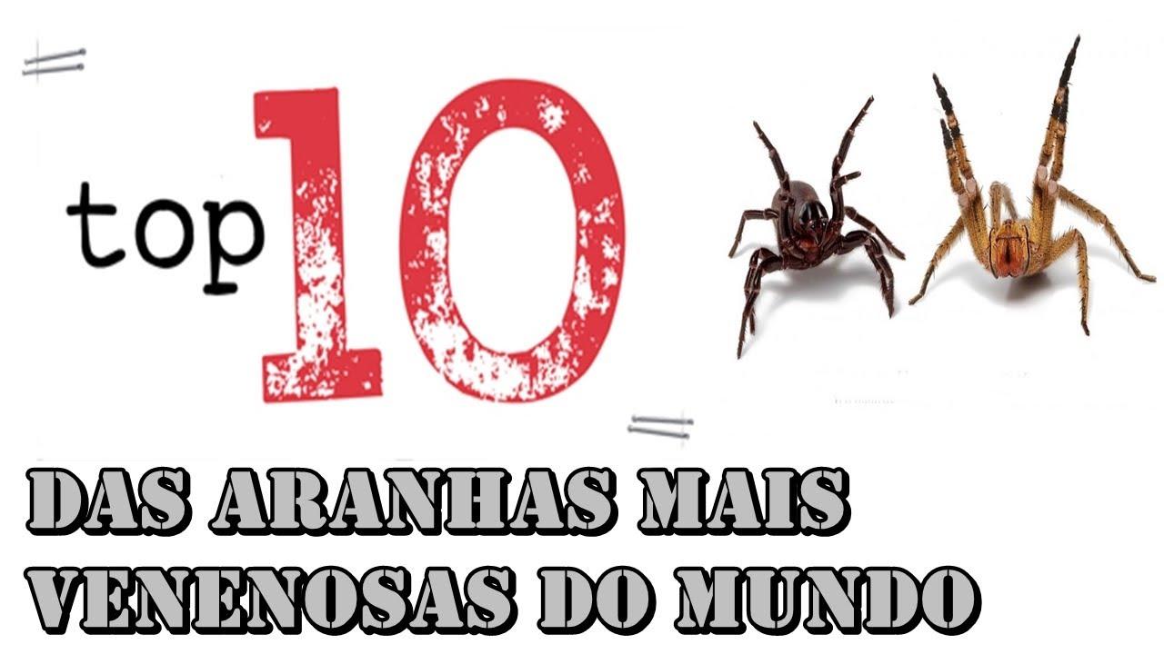 Aranhas Mais Venenosas Do Mundo