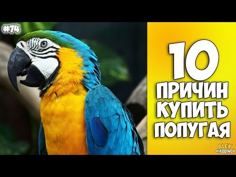 10 ПРИЧИН КУПИТЬ ПОПУГАЯ – Интересные факты!