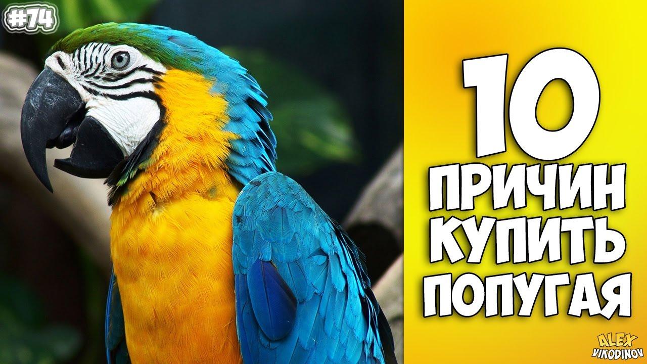 10 ПРИЧИН КУПИТЬ ПОПУГАЯ - Интересные факты!