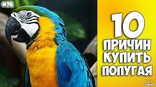 10 ПРИЧИН КУПИТЬ ПОПУГАЯ - Интересные факты!(, 2016-10-28T14:17:00.000Z)