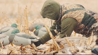 The X: Hunting Waves of Greenheads in Cut Cornfields