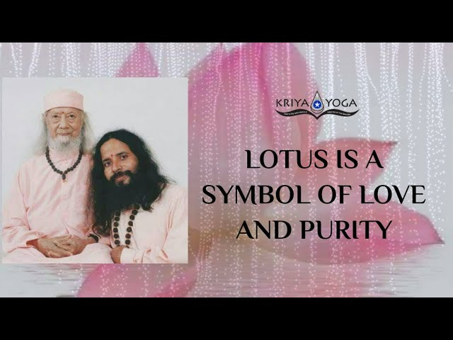 Lotus Is a Symbol of Love and Purity