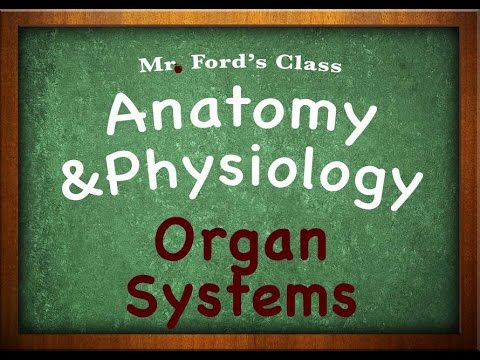 Introduction To Anatomy Physiology: Organ Systems (01:04)