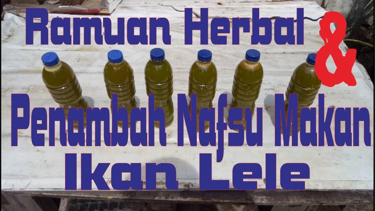 Part 2c Ramuan Herbal Dan Penambah Nafsu Makan Ikan Lele Herbs And Appetite Enhancer For Catfish Youtube