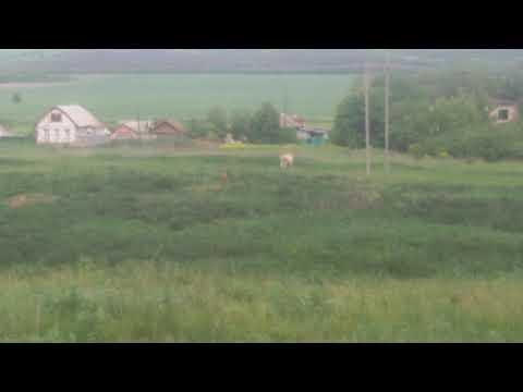 Лиса (слева) и сурки (справа). Воронежская область