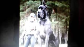 Этоп самые сильные собаки в мире