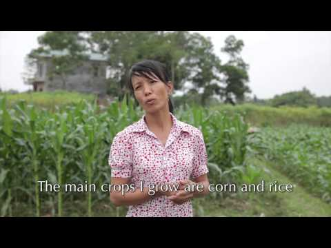 Alleviating Poverty in Vietnam