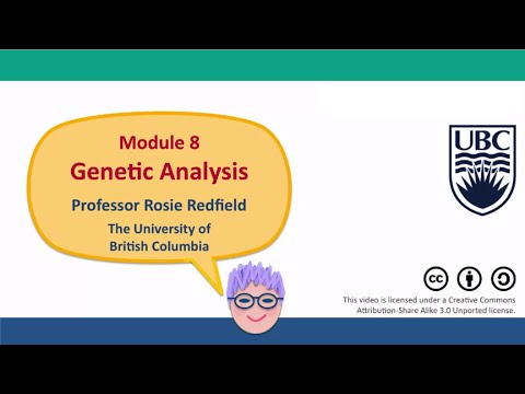 8C - How to do genetic analysis