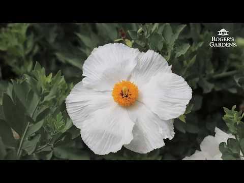 Top 3 California Native Plants