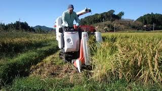 クボタコンバインER215で稲刈りです。 労力を少なくするため、手刈...