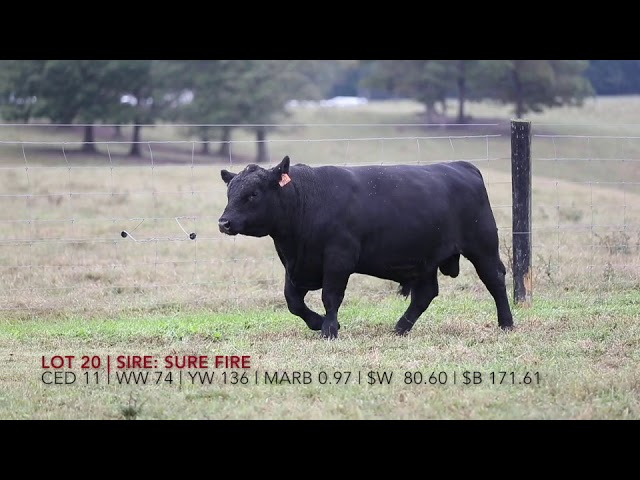 Edgewood Angus Lot 20