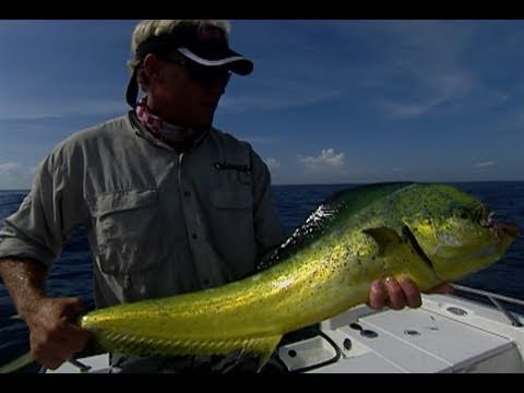 Offshore Fly Fishing for Mahi Mahi and Bonito Treasure Coast