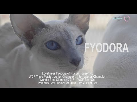 RUSORI HOUSE *PL Siamese Seychellois and Oriental cats 2019