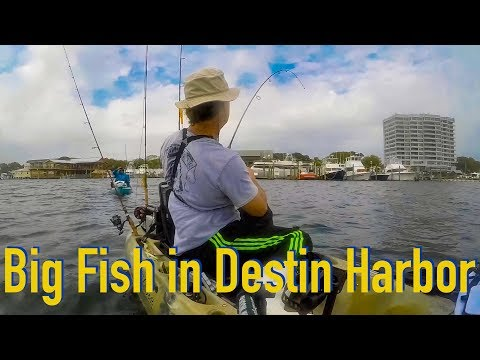 Destin Harbor Kayak Fishing - Lots Of Fish But Few Fishermen