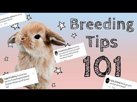 BREEDING TIPS 101