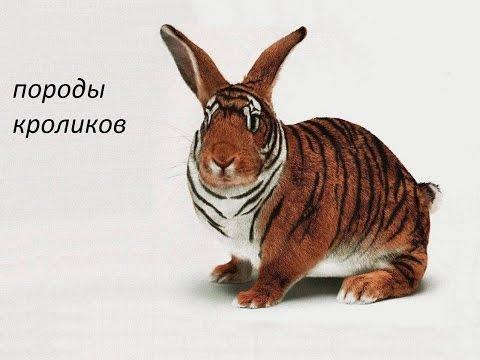 Фото пород и окрасов кроликов Мой кролик