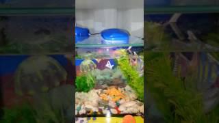 Аквариум,  с искусственными рыбками