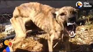 Starved, Scared Dog is Transformed By Love | The Dodo