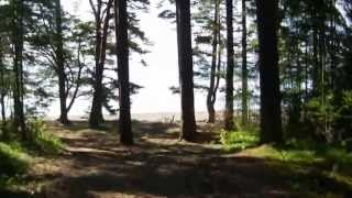 Mina hundar på utflykt till stora stranden. My dogs on an excursion to a big beach. TRAVEL_VIDEO