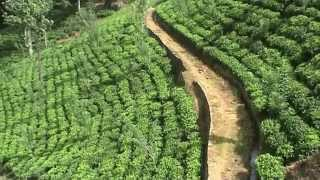 SRI LANKA  tea factory and plantation Nuwara Eliya (sd-video)