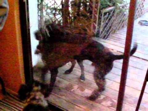 Dog Runs Into Sliding Glass Door Youtube