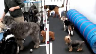 Group Agility At Dogplay Dog Daycare In Vancouver