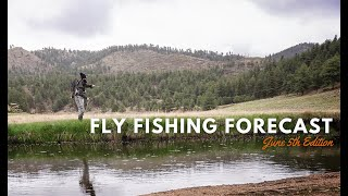 Trouts Fly Fishing Forecast   June 5th Edition
