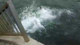 Denize Balıklama Atlayan Çocuklar