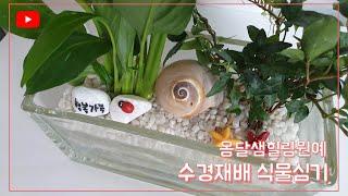 수경재배 식물심기