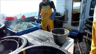 Fishing Day. Conger's Longlines in Lorient