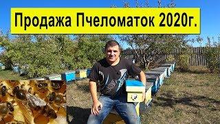 Купить Пчеломатку Карника на 2020 год 🐝 Розыгрыш ✅