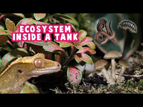 Creating An Ecosystem In A Reptile/Amphibian Tank