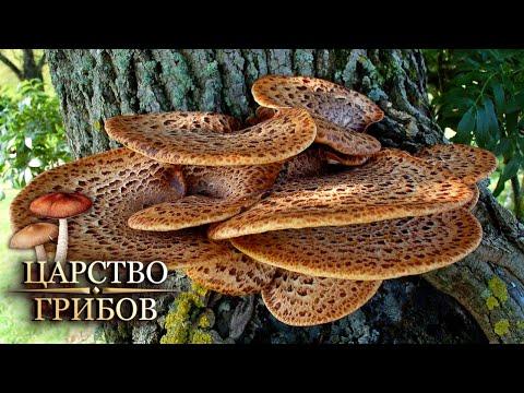 Древесные грибы. Царство грибов @Моя Планета