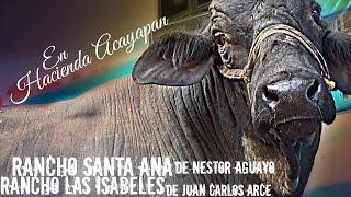 SANTA ANA CONTRA LAS ISABELES   Rancho Santa Ana y Las Isabeles en Hacienda Acayapan