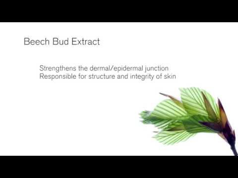 Benefits of Beech Bud Extract | Green People ingredients