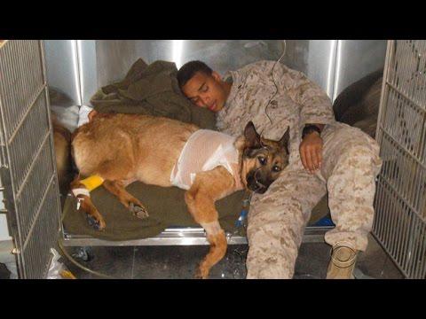 Hero Marine dog receives highest honor